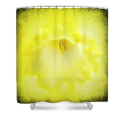 Daffodils Are Yellow Shower Curtain by Meirion Matthias