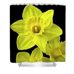 Shower Curtain featuring the photograph Daffodils by Christina Rollo