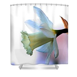 Daffy Shower Curtain by Doug Norkum
