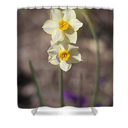 Daffy Duet Shower Curtain by Morris  McClung