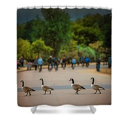 Daffy Road Shower Curtain by Wallaroo Images