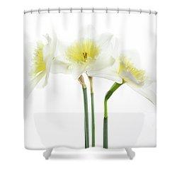 Dafs Shower Curtain by Rebecca Cozart
