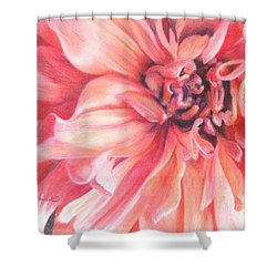 Shower Curtain featuring the drawing Dahlia 1 by Phyllis Howard