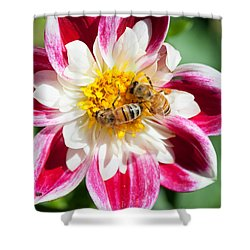 Dahlia Bee Buffet Shower Curtain