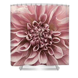 Dahlia Closeup In Rose Quartz Shower Curtain by Patricia Strand