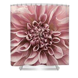 Dahlia Closeup In Rose Quartz Shower Curtain