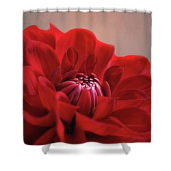 Dahlia Dalliance  Shower Curtain