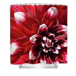 Dahlia Defined Shower Curtain by Randy Rosenberger