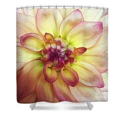 Dahlia Delight Shower Curtain