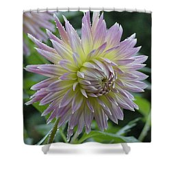Dahlia Delight Shower Curtain