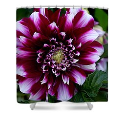 Dahlia Shower Curtain by Denise Romano