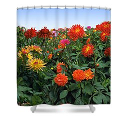 Dahlia Flower Panorama Shower Curtain