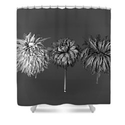 Dahlia Grouping 1 Shower Curtain by Simone Ochrym