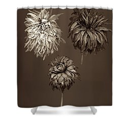 Dahlia  Grouping Shower Curtain by Simone Ochrym