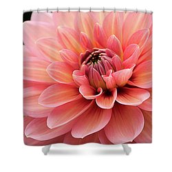 Shower Curtain featuring the photograph Dahlia In Pink And Peach by Julie Palencia
