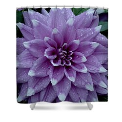 Dahlia In Rain Shower Curtain