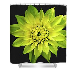 Dahlia In Yellow Shower Curtain by Julie Palencia