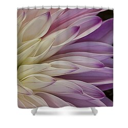 Dahlia Petals 2 Shower Curtain