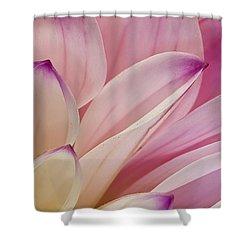 Dahlia Petals 3 Shower Curtain