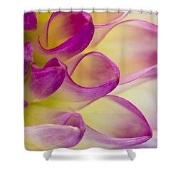 Dahlia Petals 4 Shower Curtain