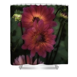 Dahlia Romantica Shower Curtain by Richard Cummings