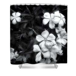 Dainty Blooms - Black And White Photograph Shower Curtain