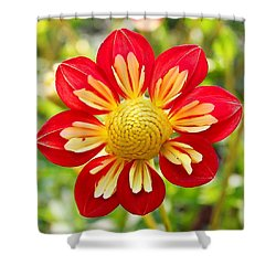 Dainty Dahlia Shower Curtain