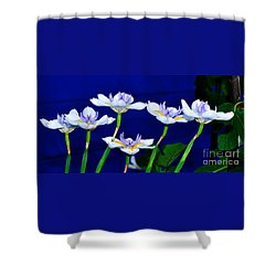 Dainty White Irises All In A Row Shower Curtain
