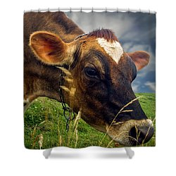 Dairy Cow Eating Grass Shower Curtain by Bob Orsillo