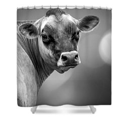 Dairy Cow Elsie Shower Curtain by Bob Orsillo