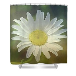 Daisies Don't Tell Shower Curtain