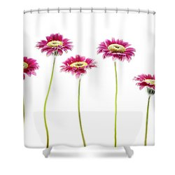 Shower Curtain featuring the photograph Daisies In A Row by Rebecca Cozart
