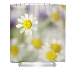 Daisies In Morning Mist Shower Curtain