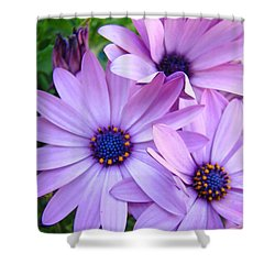 Daisies Lavender Purple Daisy Flowers Baslee Troutman Shower Curtain by Baslee Troutman