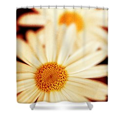 Daisies Shower Curtain by Silvia Ganora
