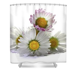 Daisies Shower Curtain by Terri Waters