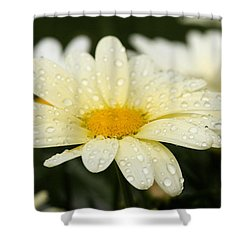 Daisy After Shower Shower Curtain by Angela Rath