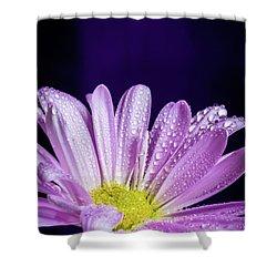 Daisy After The Rain Shower Curtain