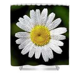 Daisy And Dew Shower Curtain by Rob Graham