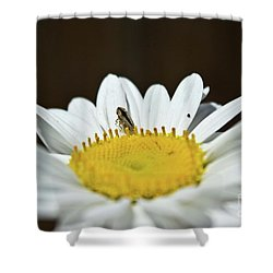 Daisy And Leafhopper Shower Curtain