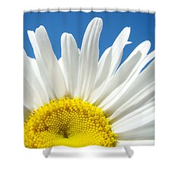 Daisy Art Prints White Daisies Flowers Blue Sky Shower Curtain
