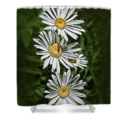 Daisy Chain Shower Curtain by Marie Leslie