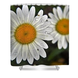 Daisy Dew Shower Curtain