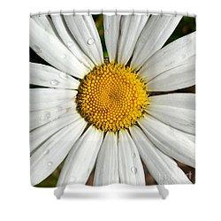 Daisy  Dew Shower Curtain