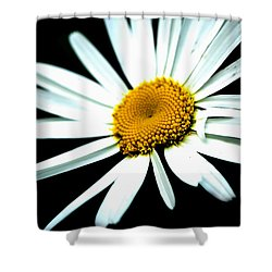 Shower Curtain featuring the photograph Daisy Flower - White Sun by Alexander Senin