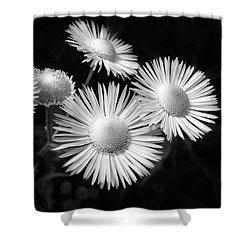 Shower Curtain featuring the photograph Daisy Flowers Black And White by Christina Rollo