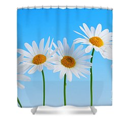 Daisy Flowers On Blue Shower Curtain