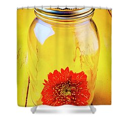Daisy In Glass Jar Shower Curtain by Garry Gay