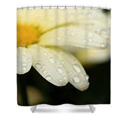 Daisy In Spring Shower Curtain by Angela Rath