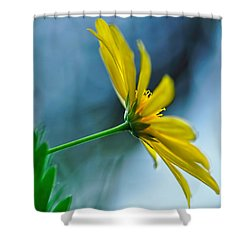 Daisy In The Breeze Shower Curtain by Kaye Menner